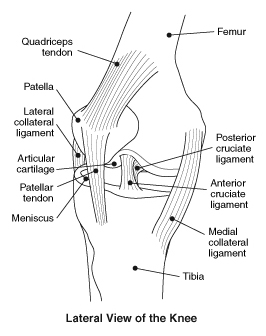 Aclprevention on knee ligament diagram